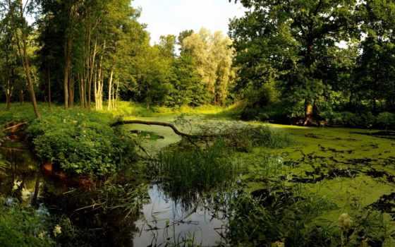 swamp, лес, trees, широкоформатные, пейзажи -, лесов, небо, природа,
