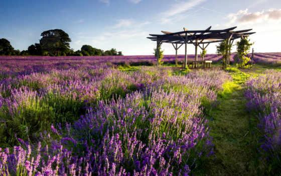 поле, лаванды, landscape, lavender, lodge, картинка,