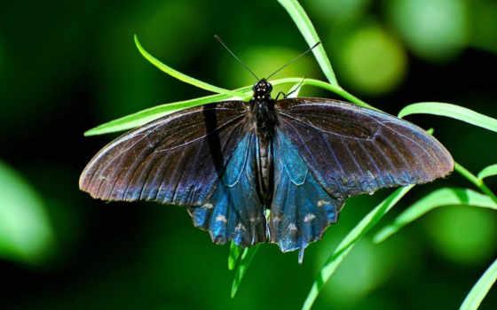 бабочки, животных, заставки, трава, бабочек, бабочка, макро, бабочками, animals, красивые,
