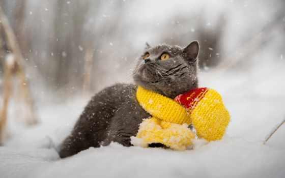 кот, шарф, cats, кошки, viewed,
