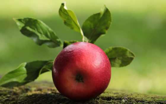 яблоки, рекорды, новости,