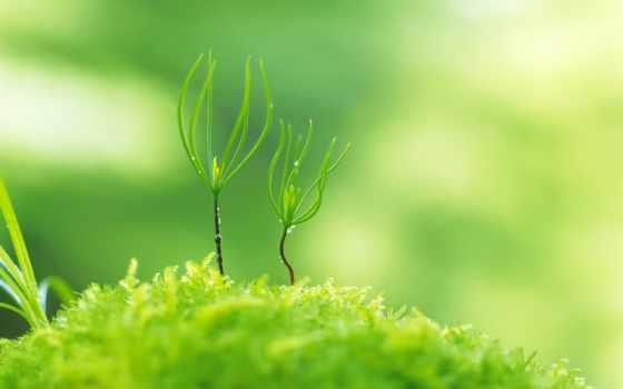 природа, зелёный, desktop, https, музыка, ways,