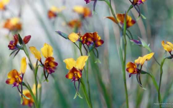 орхидеи, дикие, природе,