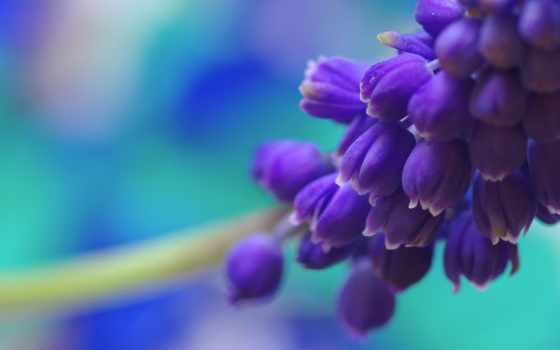 весна, коллекция, красивейших,