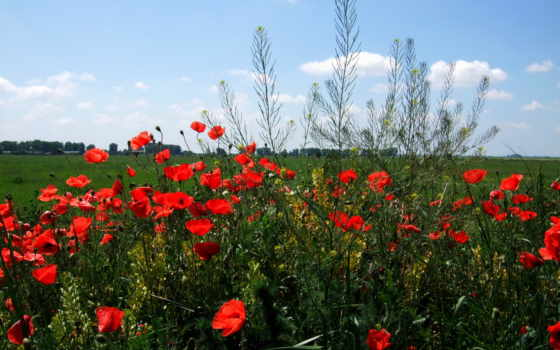 цветы степям