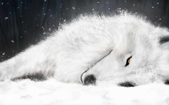 wolf, rain, wolfs, fox, white, ice, signature, аниме,