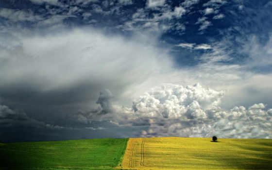 поле, yellow, блюда
