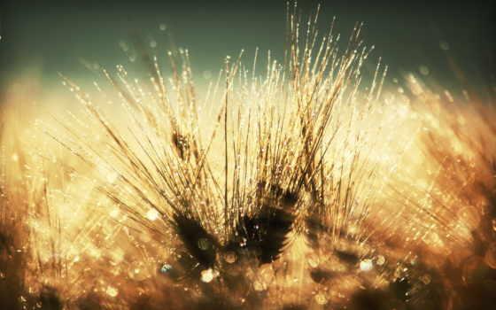 роса, утренняя, траве, цветы, макро, утренней, множество,