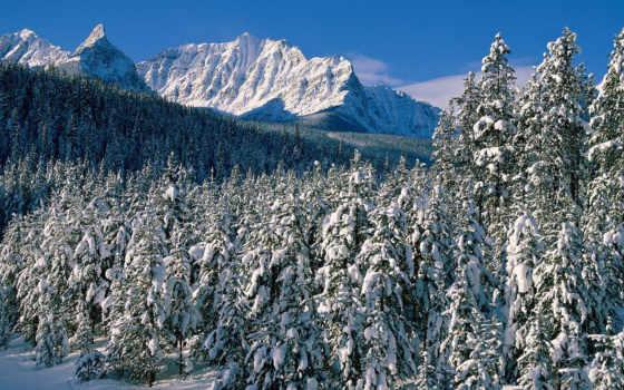 landscape, снег, гор, подножья, янв, красивые, назад, зелёный,