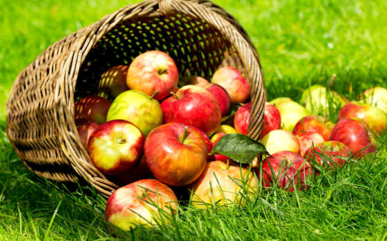 яблоки, еда, рассыпанные, корзины, картинка, wrap, опрокинутой, траве,