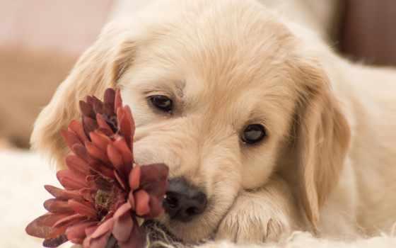 щенок, собака, cvety