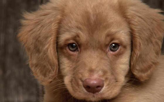 свет, бесплатные, обоях, nice, голубые, щенок, собаки, красивый, собачки, собаках,