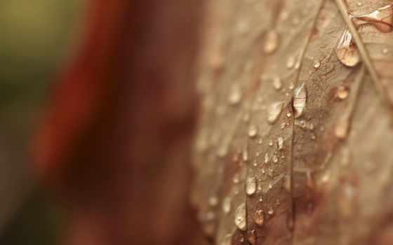 leaf, desktop, water, макро, russian,