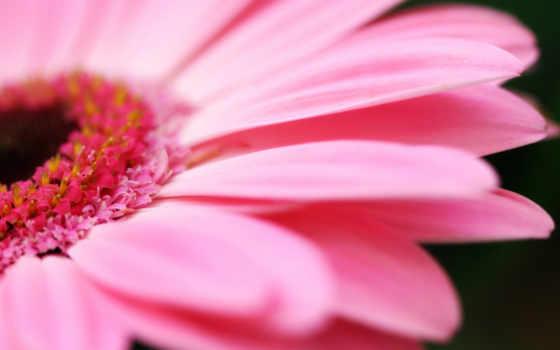 ipad, цветы, petals