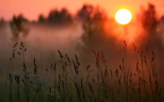 туман, природа, трава, закат, небо, лес, поле, категория, sun,