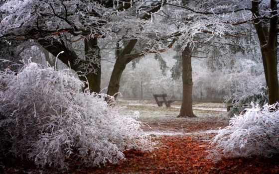 winter, trees, park, иней, скамейка, кусты, природа, ветки, магазин, снег,