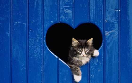 pisici, позе, animale, mai, mici, нью, pisica, са, cats,