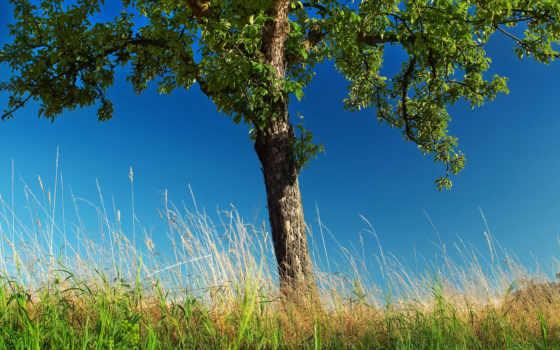 дерево, природа, trees, трава, одинокий, груша, feat,