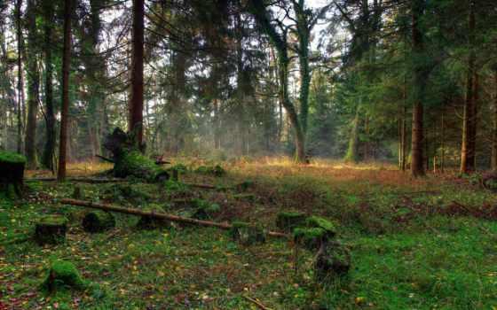 природа, коллекция, лес, landscape, яndex, природы, trees, пни,