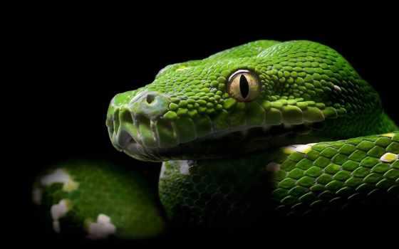 змеи, красивые