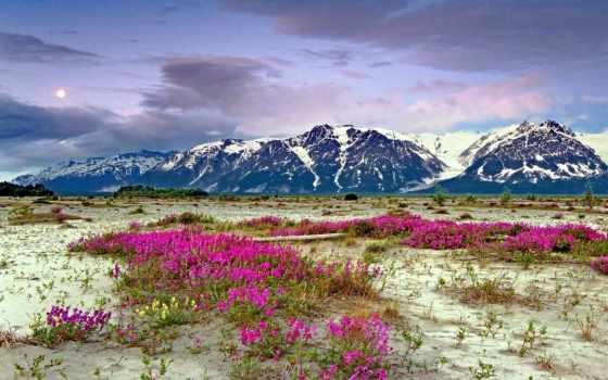 аляска, природа, edge, land, фото, сегодня, собрать