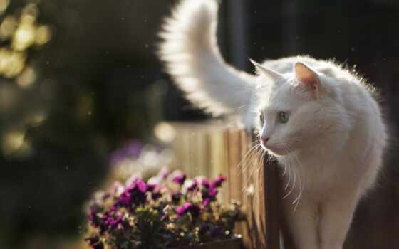 кот, white, animal, see, цветы, котенок, взгляд, пушистый, красивый