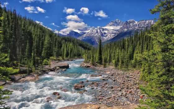 канада, река, banff, national, park, альберта, mistaya, лес,