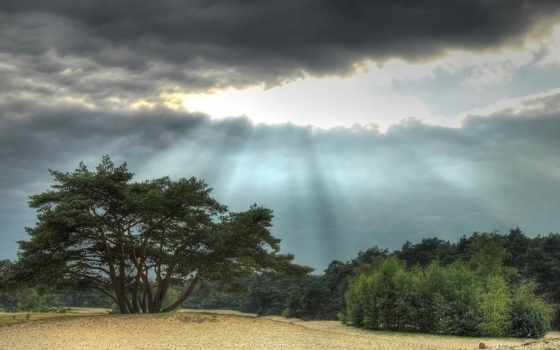 veluwe, stormclouds, нидерланды, sunrays, trees, природа, landscape,