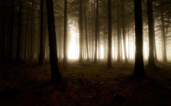 лес, деревья Фон № 32040 разрешение 1920x1080
