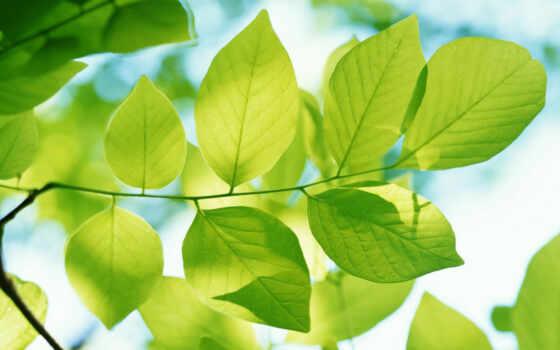 природа, весна Фон № 32162 разрешение 1920x1080