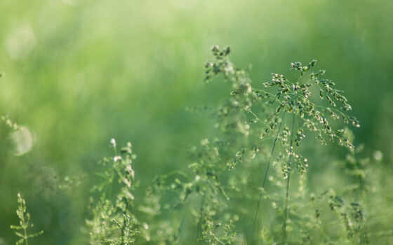 nature, descargar, brouiller