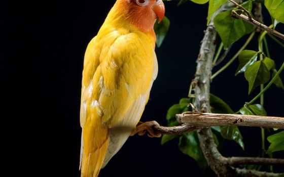попугай, yellow, штушка
