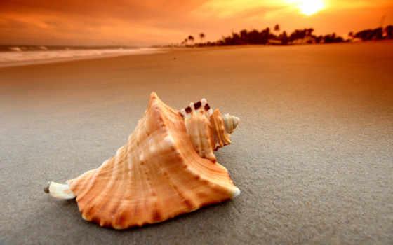 ракушки, море, seashell, макро, моря, пляж, песок, природа, морская, которых,