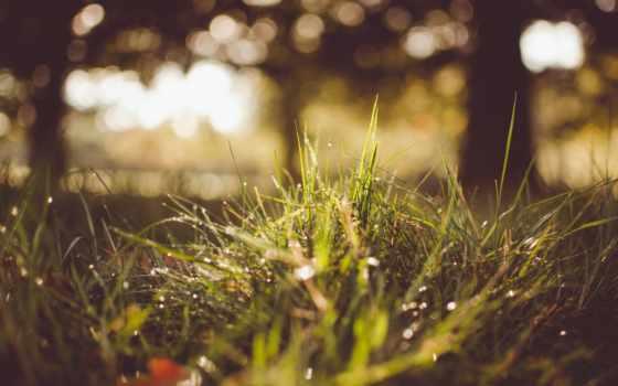 трава, природа, дождь, blue, роса,