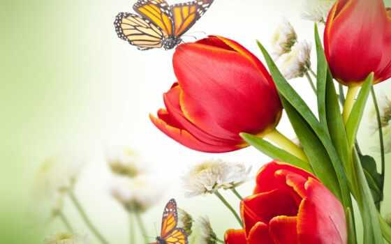 картинка, тюльпан, наклейка, вышивка, доставка, опт, flore, moderation, april, foto