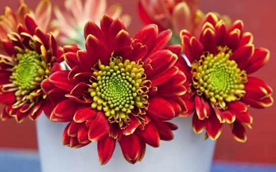 цветы, заставки, высококачественные