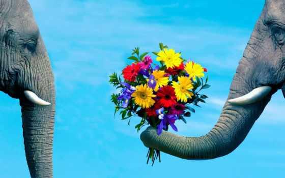 слон, цветы, ствол, pair, романтика, забота,