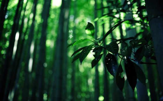 бамбук, лес, иероглифы, зелёный, colour, природа,