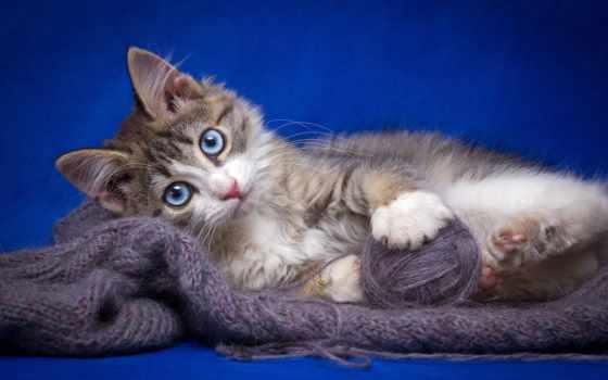 parede, papéis, papel, fundo, adorable, blue, gato, planos,