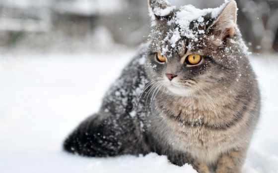 winter, снег, кот, зимы, начало,
