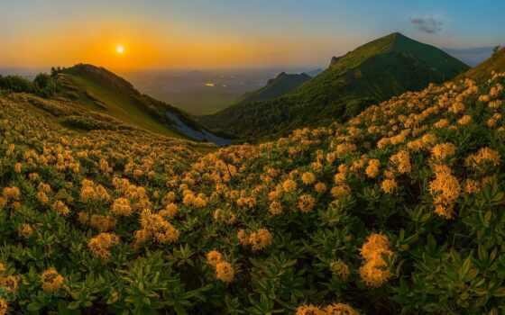 рододендрон, цветы, гора, beshtau, закат, лашков, top, landscape, дерево, облако, yellow