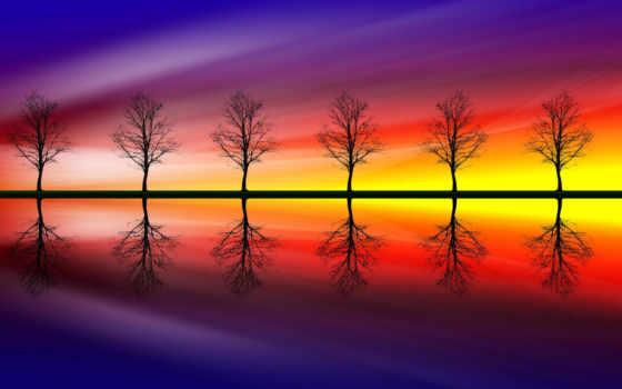 картинку, закате, дерева