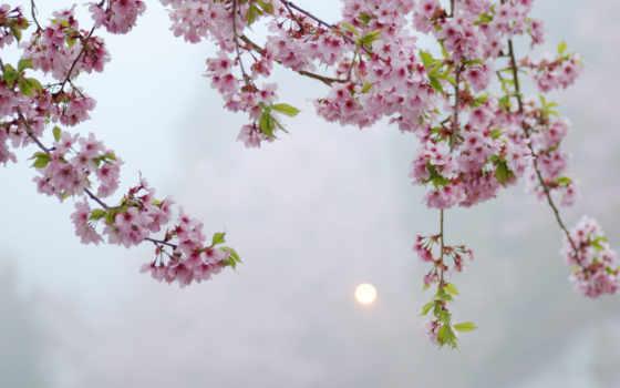 розовые, cvety, дерево