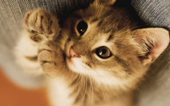 profile, котенок, фото