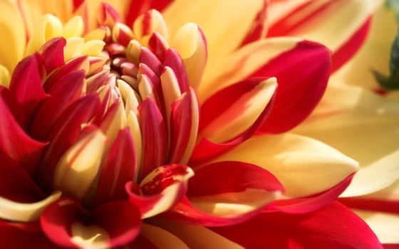 цветы, рыжие, просмотров