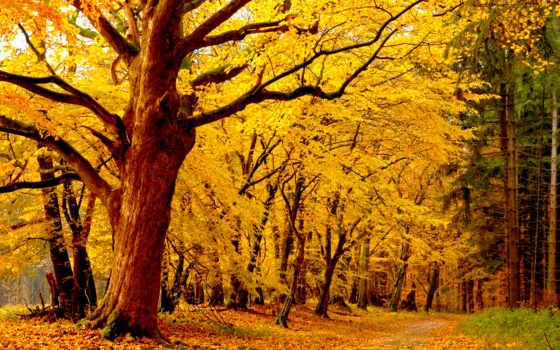 лес, trees, осень, листва, желтые, лесопарк,