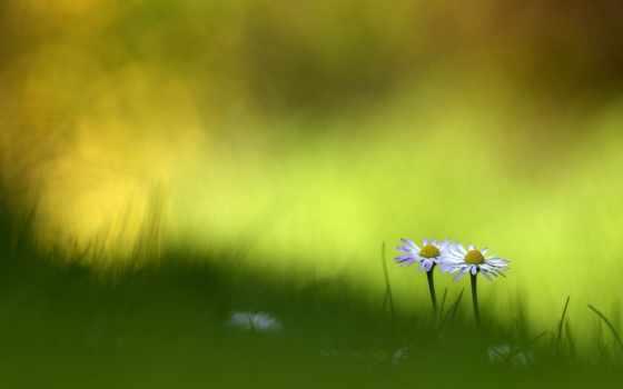 free, трава, kartinik, ваше, choose, оригинал, cvety, добавить