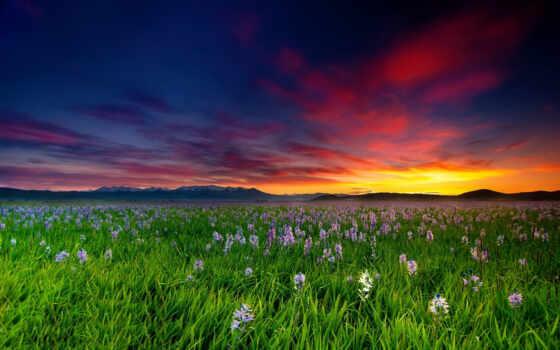 цветы, поле, закат, оформление, sun, water, sham, raim, landscape, песнь, definition
