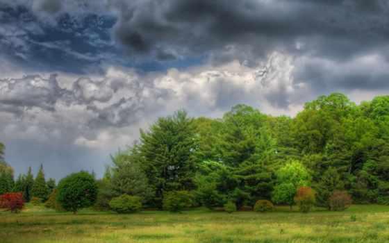 облака, лес