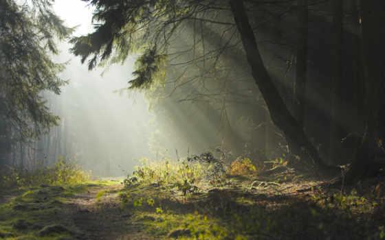 природа, деревья, wallpaper, hd, лето, дорога, вечер, утро, forest, дремучий,